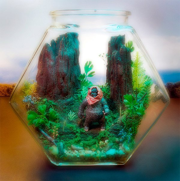 star wars terrarium endor
