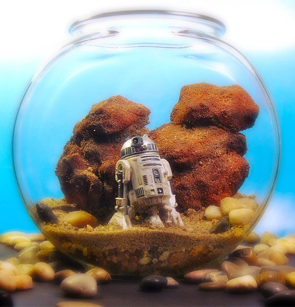 star wars terrarium tattooine