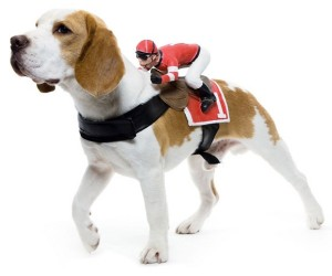 Dog Rider3