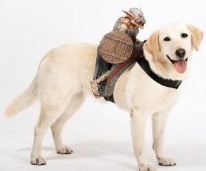 Dog Rider4