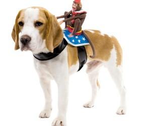 Dog Rider5