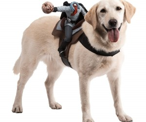 Dog Rider6