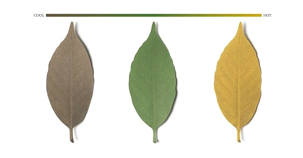 leaf_thermometer_2
