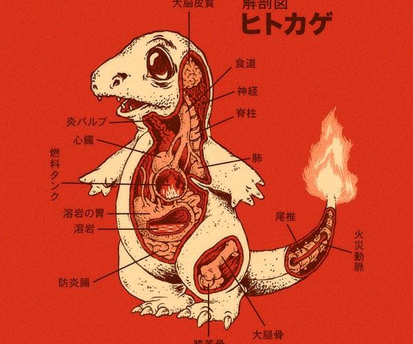 pokemon anatomy by ryan mauskopf 2