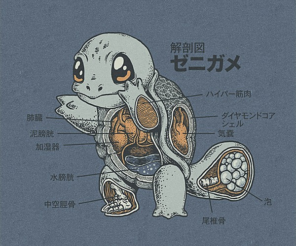 pokemon anatomy by ryan mauskopf 3