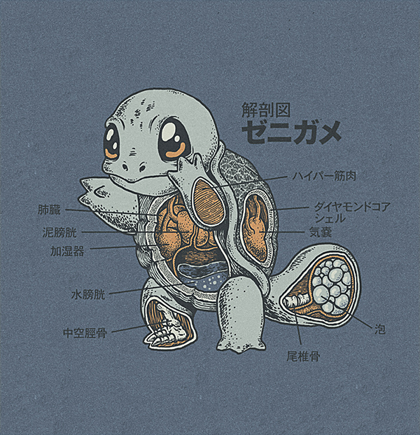 Pokémon Anatomy: Artist Uses Imagination! It\'s Super Effective ...