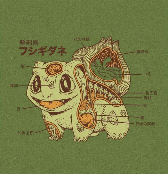 pokemon anatomy by ryan mauskopf