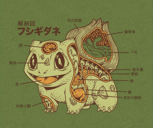 Pokémon Anatomy: Artist Uses Imagination! It's Super Effective!