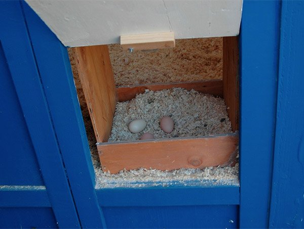 tardis_chicken_coop_3