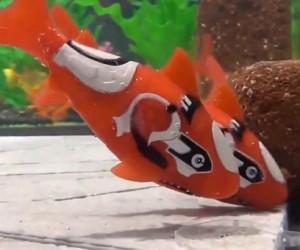 Takara Tomy Robo Fish: Wall-E Meets Nemo