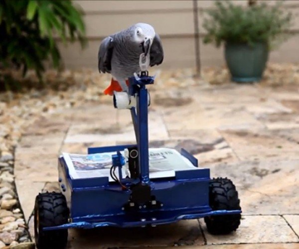 BirdBuggy Lets Lazy Parrot Get Around