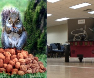 Researchers Build Deceptive Robots Based on the Behavior of Hoarding Squirrels