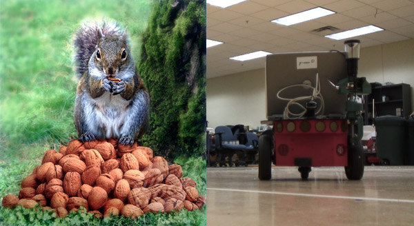 deceptive squirrel robot