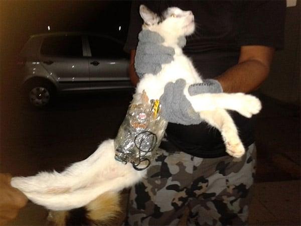 cat_contraband