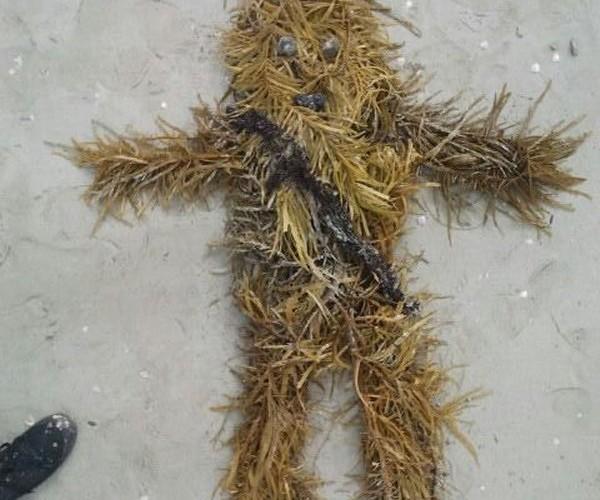 Seaweed Chewbacca: Under the Kashyyyk Sea
