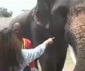Elephant Eats iPhone, Poops It out a Bit Later
