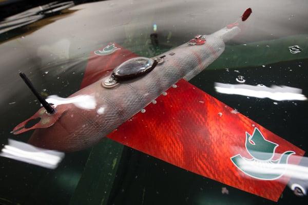 grace robotic fish top photo