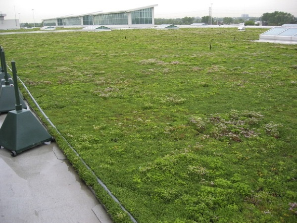 Ford green roof 1