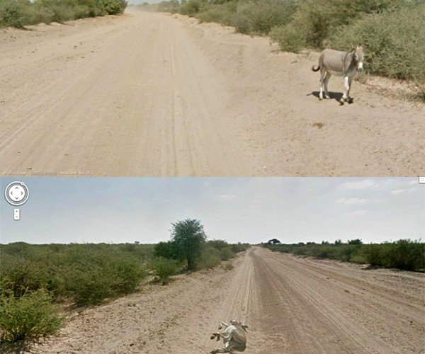 Google Says It Didn't Kill a Donkey with a Street View Car in Botswana