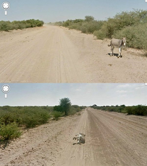 street view donkey