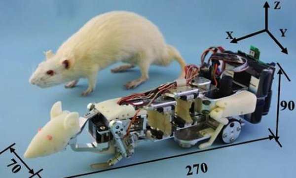 Japan Uses Robot Rats to Terrorize Real Rats
