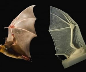 Robotic Bat Wing Developed: Where Does He Get All Those Wonderful Toys?