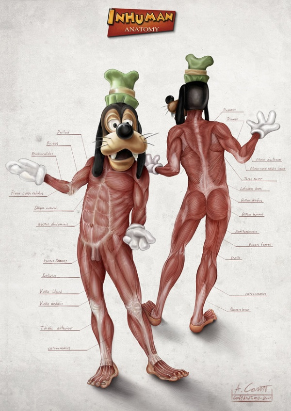 Disney Cartoon Character Anatomy2