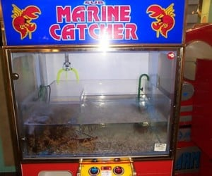 Claw Machine for Foodies: Make a Play for Your Lobster Dinner
