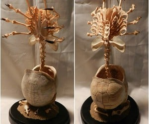 Alien Facehugger Skeleton Made from Real Bones