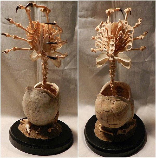 facehugger sculpture Alien Facehugger Skeleton Made from Real Bones