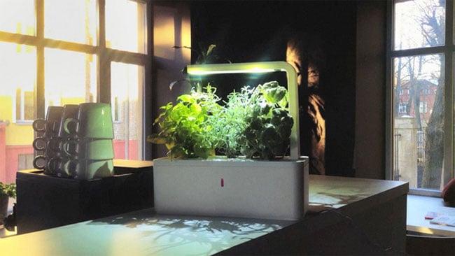Smart Herb Garden Needs No Sun or Soil