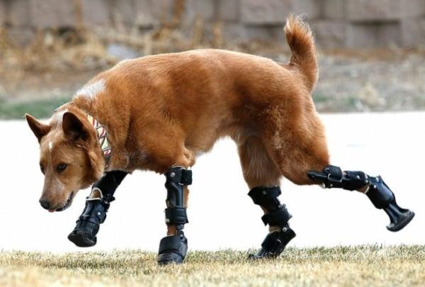 Dog Prosthetics