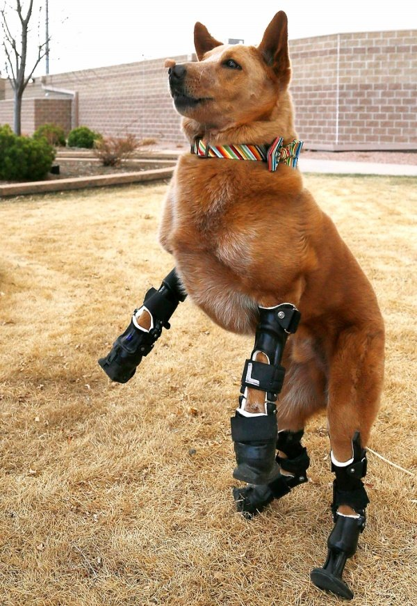 Dog Prosthetics1