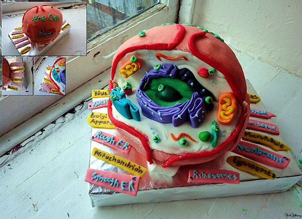 Cell Cake: Dibs on the Nucleus