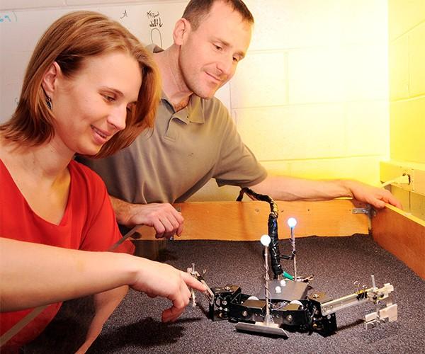 Flipperbot Robotic Sea Turtle: Teenage Robot Ninja Turtle