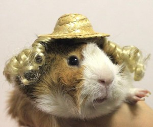 Dressed up Guinea Pigs Rule the Catwalk