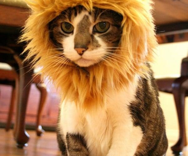 Lion Hat Turns Your Pet Cat into a Pet Lion