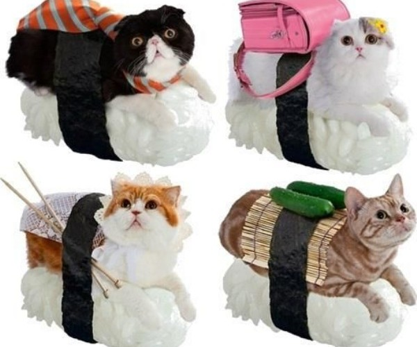 Sushi Cats – Because, Japan.