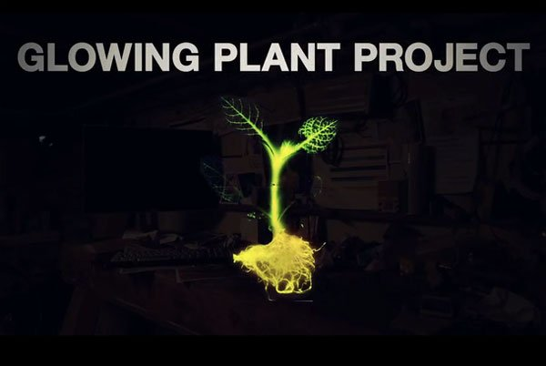 Luminescent Plant Kickstarter Project: Miracle Glow