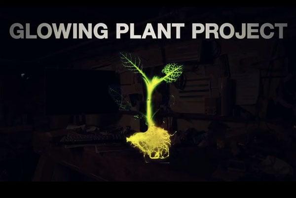 glow-plant