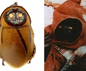 Cockroach Looks Like a Jawa: Lives in a Skincrawler