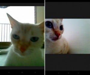 Snapcat for Android: Because Cats Want to Take Selfies, Too