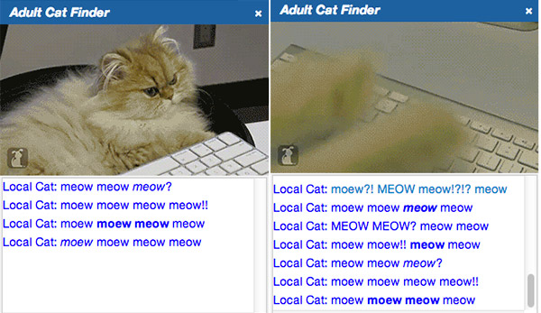 adult cat finder