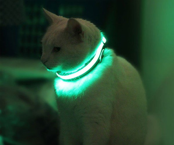 HALO MINI Pet Collar: All Your Pets Are Safe with Us