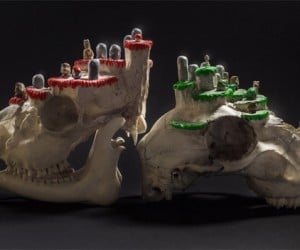 Super Mario Level Skulls, Your Princess is in Another Brain Cavity