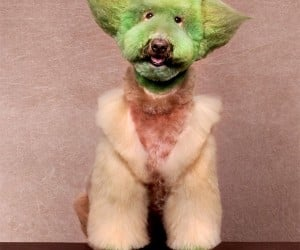 Do or Do Not Go to Dog Grooming School, There is No Try