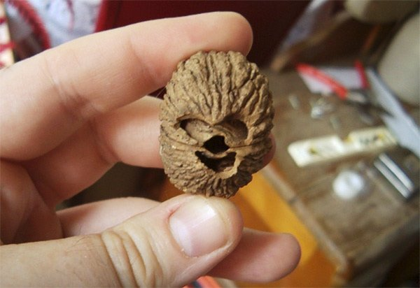 chewbacca walnut