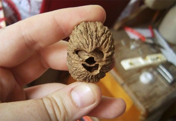 chewbacca walnut