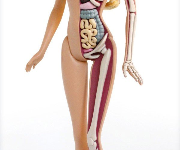 Anatomical Barbie: Little Girls, Look Away.
