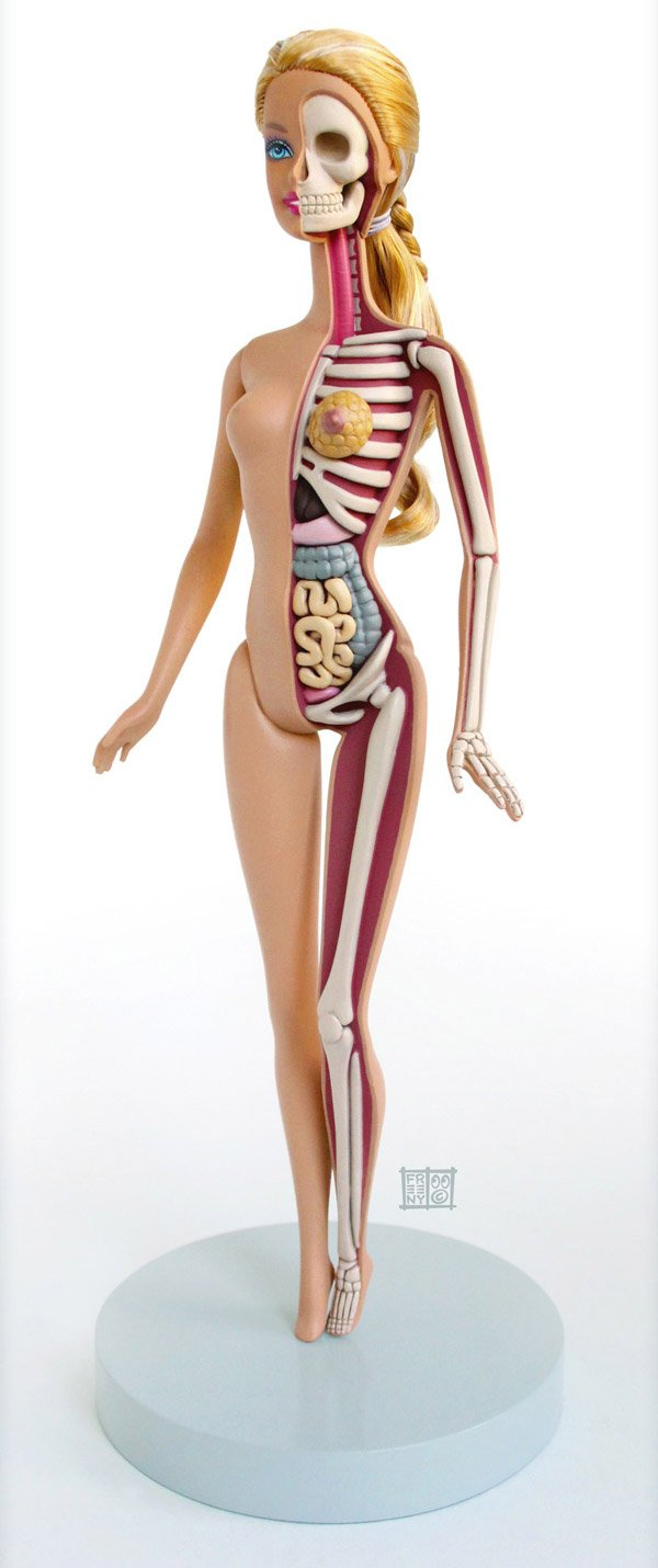 barbie anatomy t